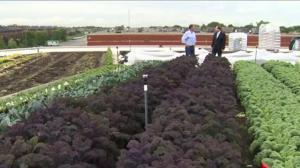 Montreal grocery store selling produce grown on roof